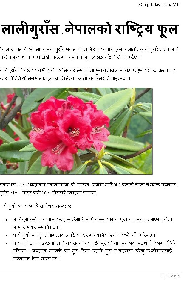 Rhododendron, Lali Gurash, National flower of Nepal