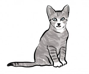 Cat_illustration